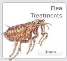 Flea Treatments